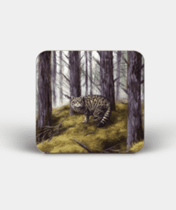Country Images Personalised Custom Board Coaster Coasters Scotland Highland Collection Wildcat Wild Cat Animals Wildlife Gift Gifts