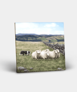 Country Images Personalised Custom Ceramic Tile Tiles Scotland Highland Collection Sheep and Sheepdog Crofter Crofting Farm Nature Wildlife Gift Gifts
