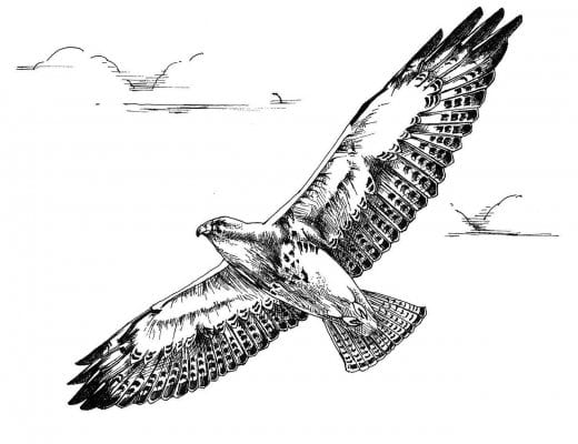 Sample Line Drawing for Printing or Engraving